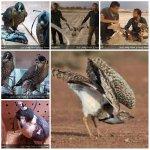هوبره . شکارچیان غیرمجاز